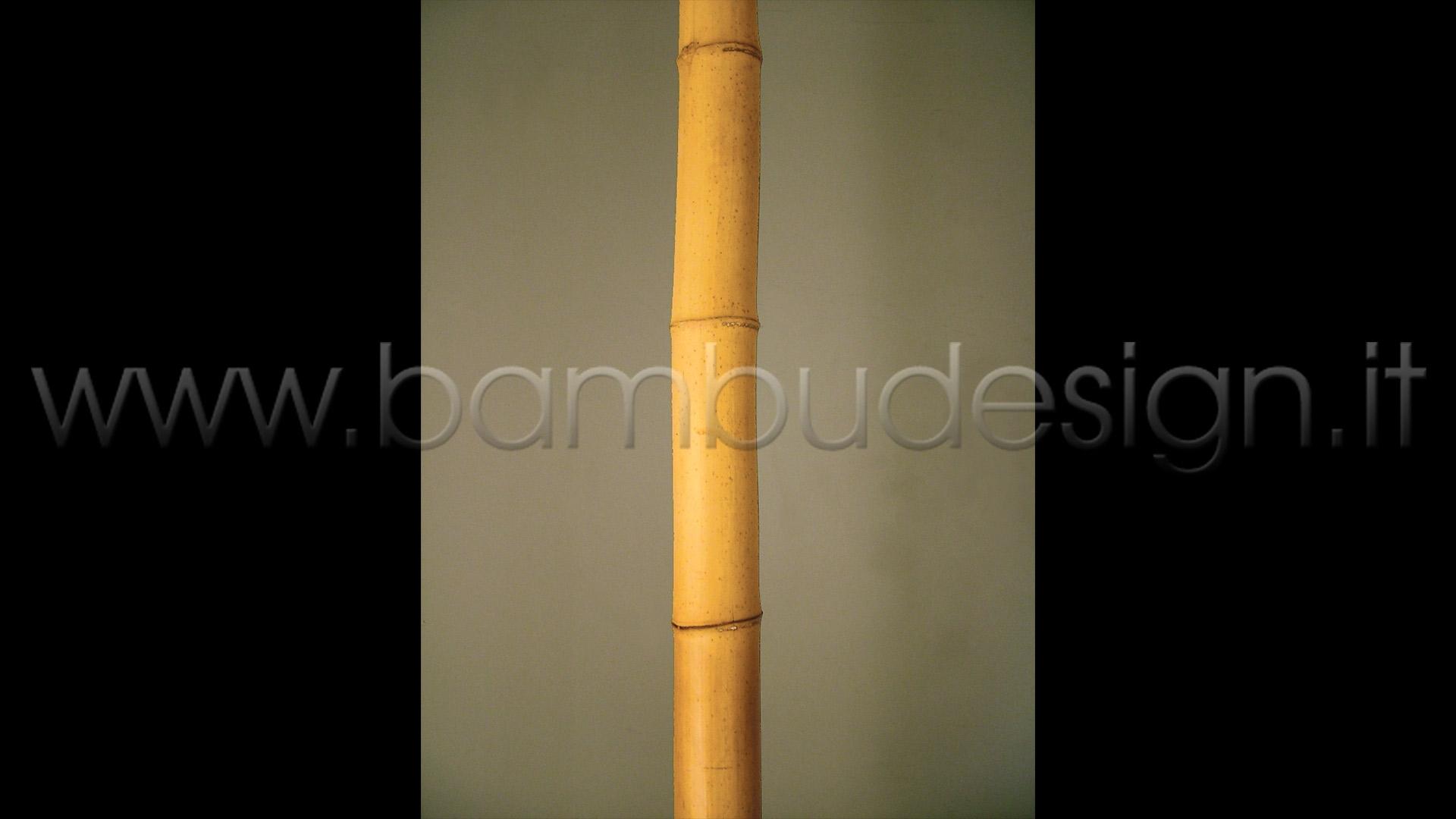 Canne di bambu importazione diretta vari diametri disponibili